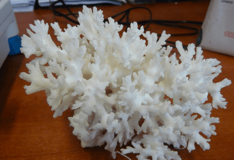 Кораллы, контрабанда